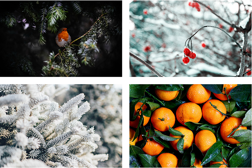 Winter Competition Collage 3