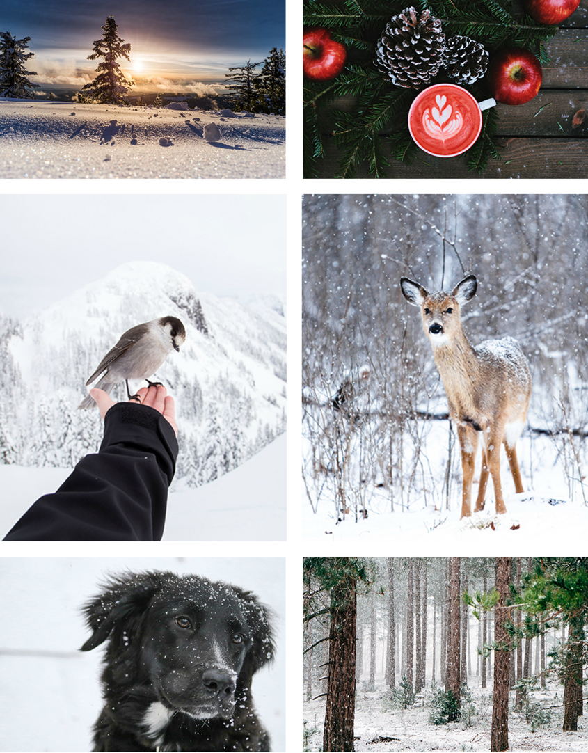 Winter Competition Collage 6